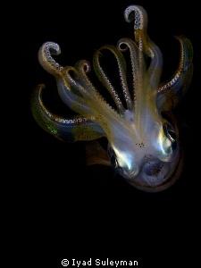 Reef Squid by Iyad Suleyman