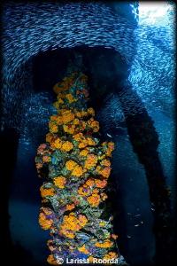 Swirls of fish under the dock by Larissa Roorda