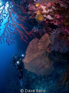 Amazing dive at national park Napantao, Southern Leyte by Dave Benz