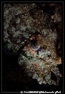 Cuttlefish's camouflage. by Ferdinando Meli