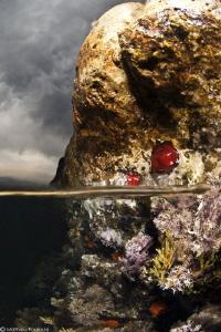 "mediterranean ""intertidal"" zone (Algeria) by Mathieu Foulquié"