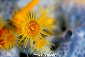 Sunflower on lunar sponge by Pietro Cremone