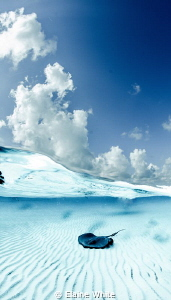 Blue Split, The Sandbar, Grand Cayman Nikon D700, Tokina... by Elaine White