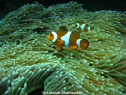 Finding Nemo Camera Model : Canon PowerShot G12 F-stop ... by Lukman Shamsuddin