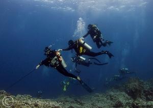 Hanging around. Isla Socorro. D3 15mm by Mark Thomas