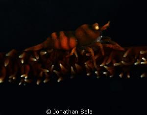 galatea by Jonathan Sala