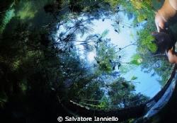 AUTOSCATTO FRA I GIRINI by Salvatore Ianniello