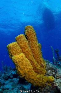 sponges under boat by Leena Roy