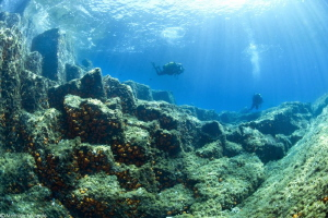 underwater basaltic organs (Algeria) by Mathieu Foulquié