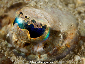 Eye of Longsnout Flathead  taken with +15 diopter by Iyad Suleyman