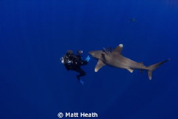 A lucky diver gets some one on one time with this oceanic... by Matt Heath