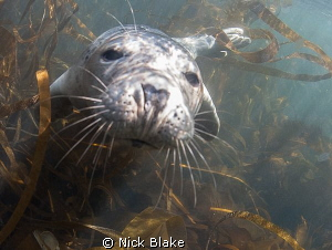 A chilly 9 degrees in the sea off the Farne Islands but t... by Nick Blake