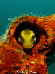 Loved the contrast here of the red sponge and the yellow ... by Maria Munn