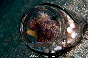 """""""Message in a bottle"""" :-)  Octopus by Iyad Suleyman"""