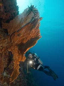 Reefscape in Cabilao by Alex Varani