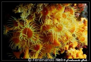 Flowers of the sea. by Ferdinando Meli