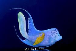 The blue by Ilan Lubitz