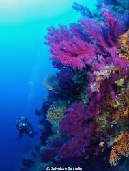 osservare i colori del Mediterraneo by Salvatore Ianniello