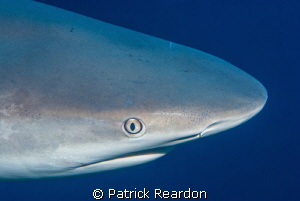 Shark in Turks and Caicos.  He followed our live aboard f... by Patrick Reardon