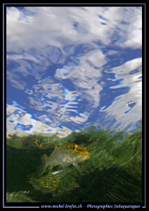 Young Pike Fish... :O)... by Michel Lonfat