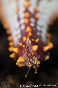 Detail of a starfish found at Ixtapa, Mexico. by Christian Vizl