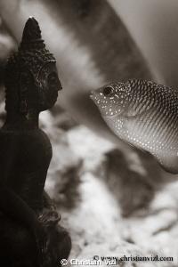 Kissing Buda II. by Christian Vizl