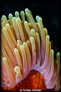 Anemone textures by Larissa Roorda