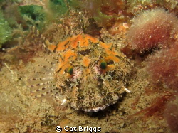 camoflauge master - sea scorpion canon s95 1/640s f/4.... by Cat Briggs