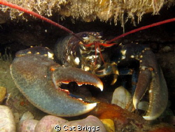 lobster hole by Cat Briggs
