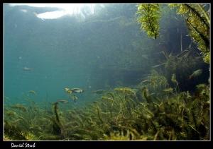 Freshwater atmosphere :-D by Daniel Strub