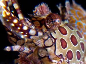 Abstract  Marble shrimp by Iyad Suleyman