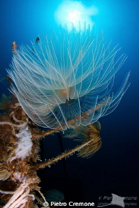 Tubeworm in the sun by Pietro Cremone