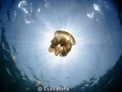 Jellyfish Lake Kakaban, S100 + wide angle +dual inon Z240... by Syed Hafiz