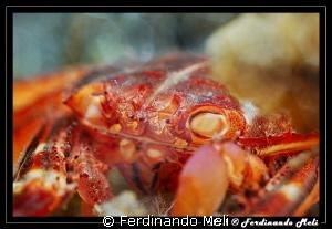 Predated crab by Ferdinando Meli