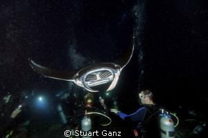 Divers enjoying the night manta dive in Kona Hawaii. by Stuart Ganz