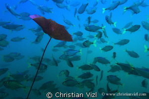 Fishes and water plant in cenote Aktun Ha, Mexico. by Christian Vizl