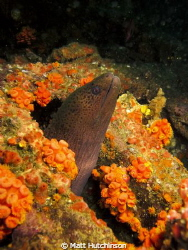 Eel, in a wreck diving with Scubacat Diving. Taken with C... by Matt Hutchinson