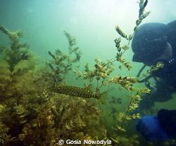 Hidden beauty of Polish lakes II. by Gosia Nowodyla