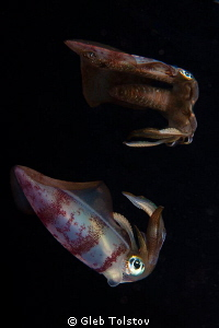 The squid. by Gleb Tolstov