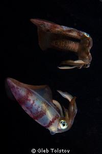 The squid. by Gleb Tolstov