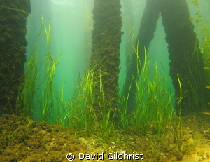Beneath the Pier at the Swing Bridge site, Welland Scuba ... by David Gilchrist