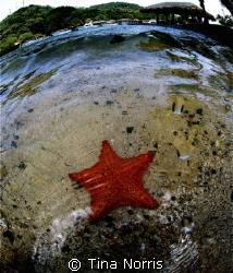 Starfish by Tina Norris
