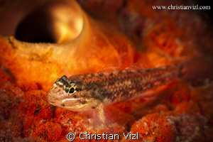 Close up of fish and coral at Veracruz, Mexico. by Christian Vizl