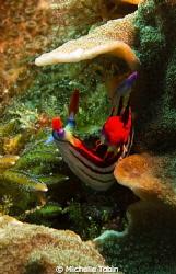Nudibranch by Michelle Tobin