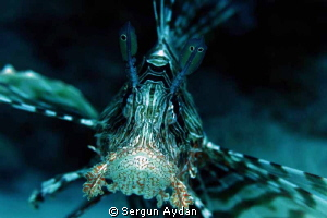lion fish portraid by Sergun Aydan