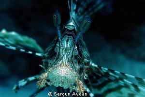 lion fish portraid by Sergun Aydan