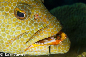 Grouper in Little Cayman; T2i w/ Canon 100mm macro lens; ... by Ellen Rierson
