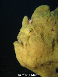 Taken in Lembeh with a Canon Ixus 980 with INON S-2000 st... by Maria Munn