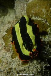 Flatworm Taken on a Night Dive in Mabul by Michelle Tobin