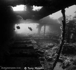 Early morning dive on the Kingston wreck, this small swin... by Tony Mccann